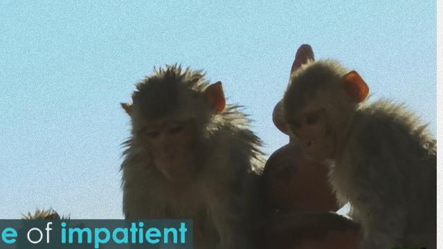 monkey-3_e