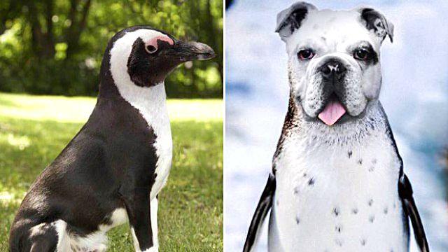 penguin8_ea