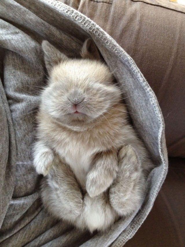 cute-cat_e