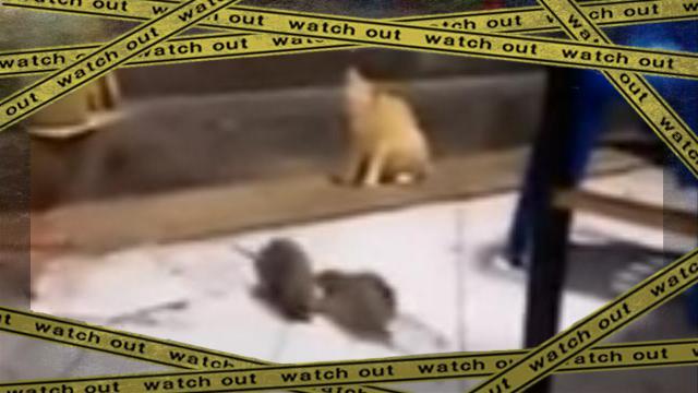 ratsok [www-frame