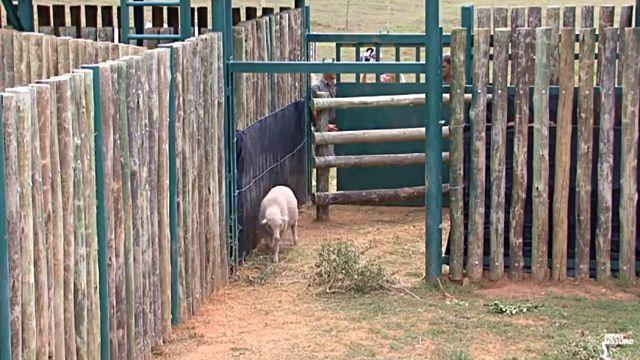 sheepnelephant2
