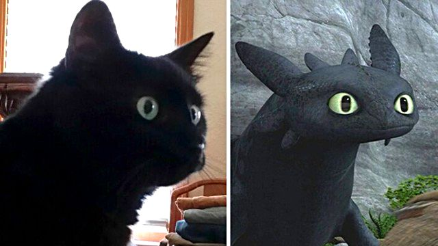 cats-toothless-lookalikes-35-57cec61c00b9c__700_ea