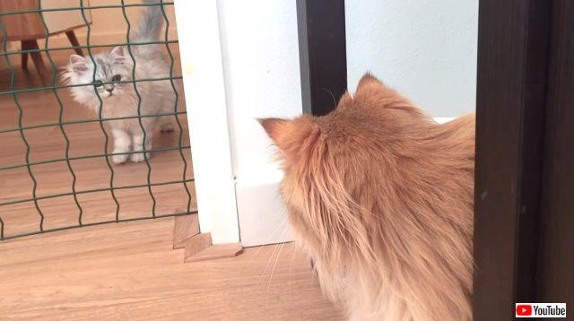 introducingtwocats1_640
