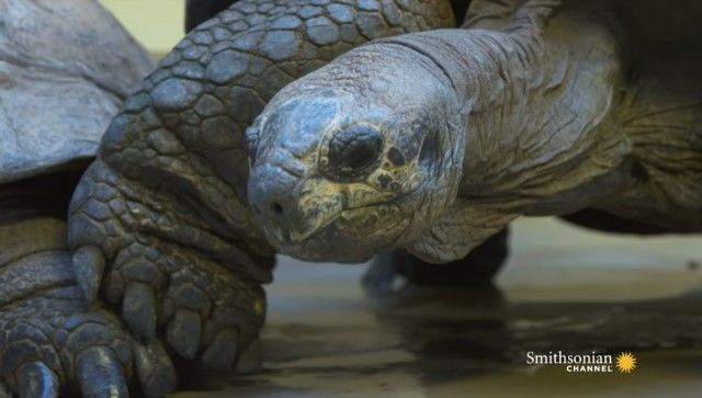 tortoises1_e