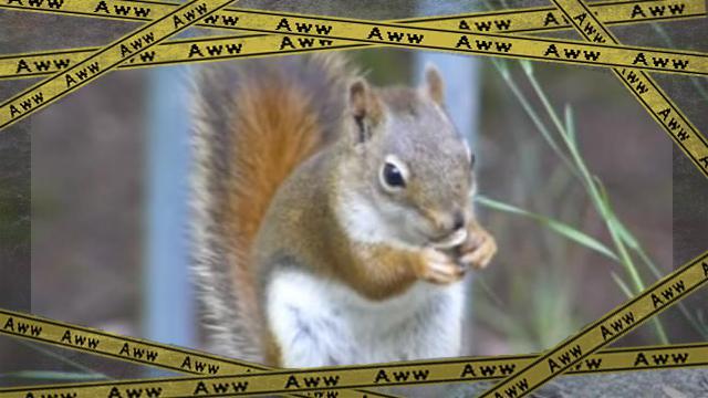 squirrel ok-frame