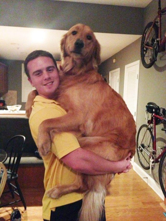 big-puppy20_e