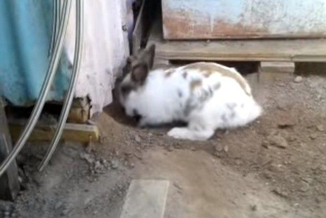 digging3_e