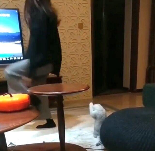 dancingcat2_640