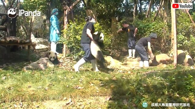 pandaworkers1_640