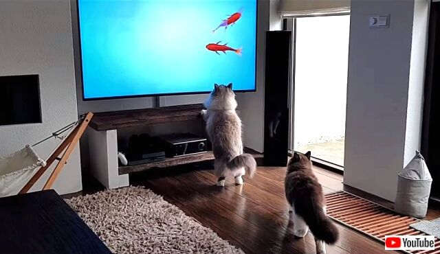 tv4cats3_640