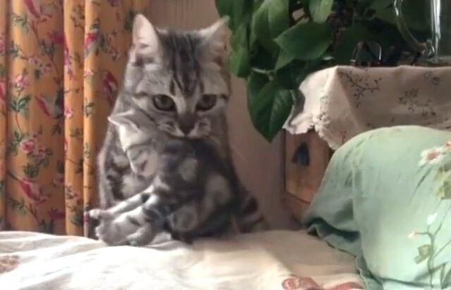 「これで子猫たちの回収完了!」最後の1匹をベッドに運び終えたお母さん猫のミッションコンプリート