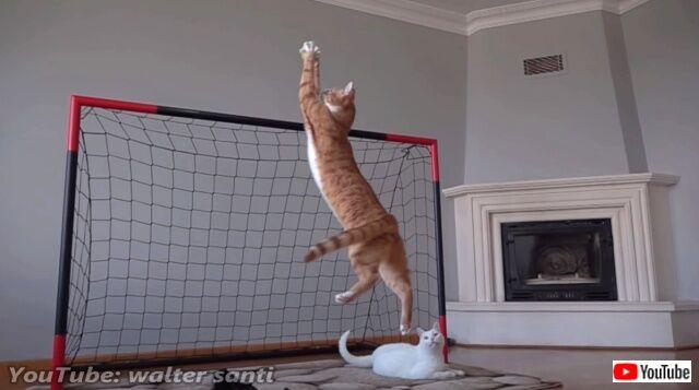 goalkeeper3_640