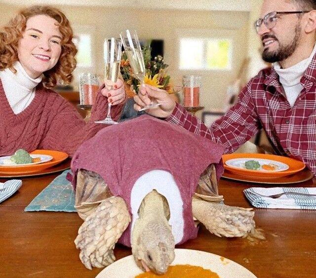 ペットのカメとお揃いのお洋服でパシャリ!愛するケヅメリクガメとの素敵なファミリー写真集