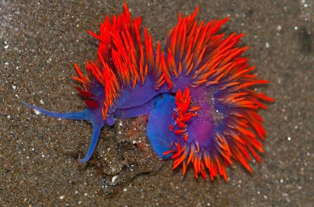 beautiful-unusual-sea-slugs-10__880_e
