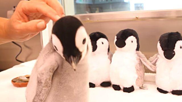penguinbaby4