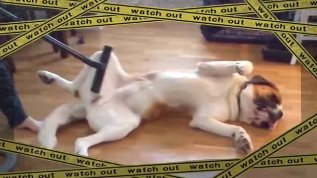 doggyfail3-frame