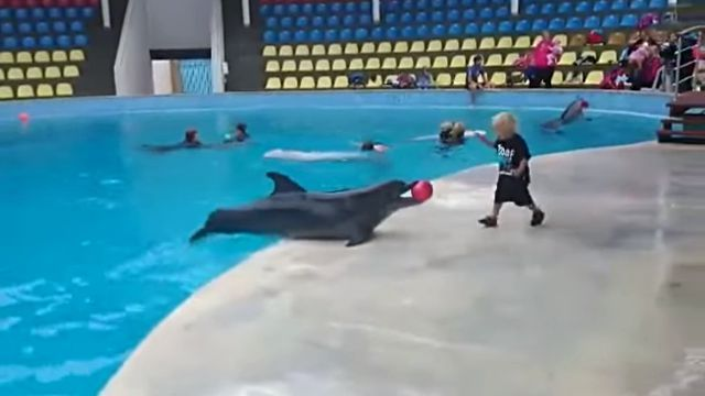 dolphinwithkid2