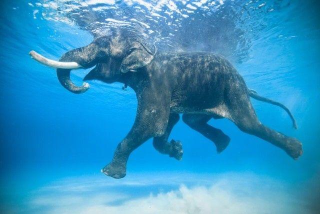 elephant5_e