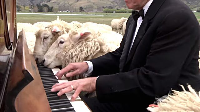 concertforthesheep3