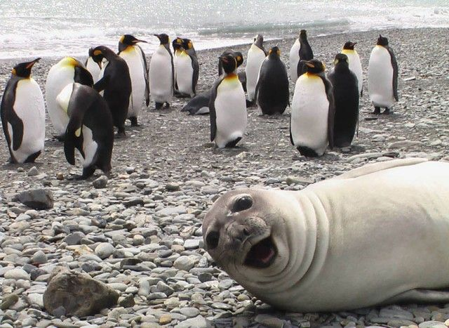 funny-animal-photobombs-13__880_e