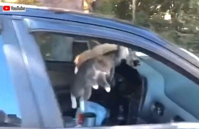 crazycats3_640