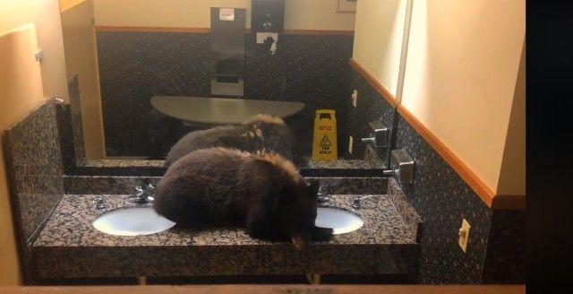 bearinbathroom2_e
