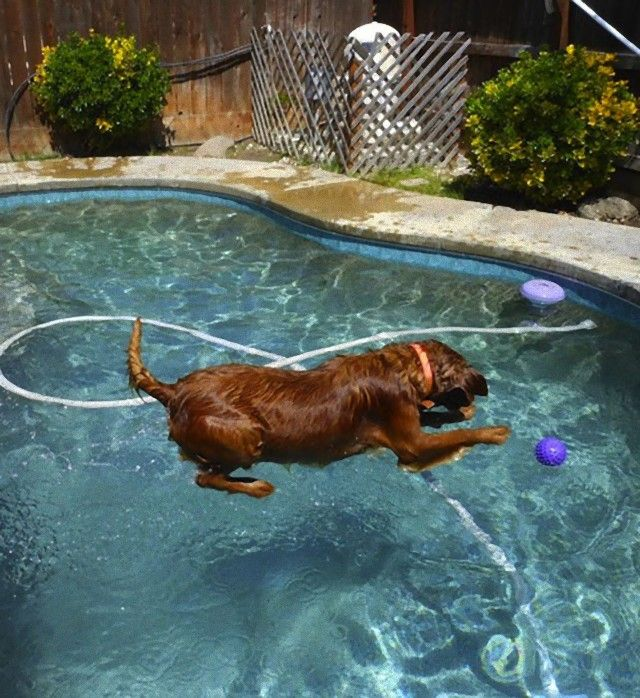 perfectly-timed-photos-dogs-1_e