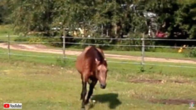 horsenbutterfly4_640