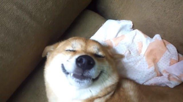 smilingshiba4_e_e