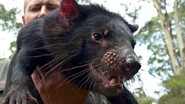 Tasmanian1Devil