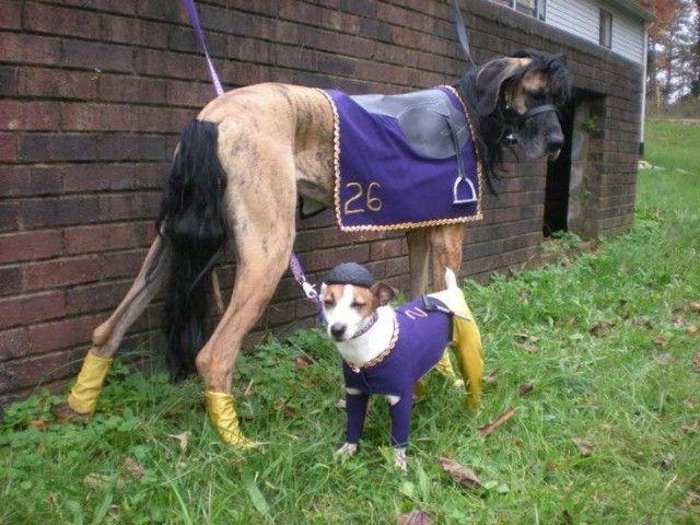 horse_and_jocky_e