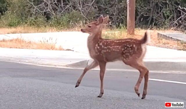 deer3_640