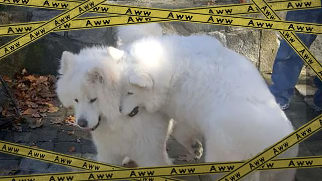 dog-4_e-frame