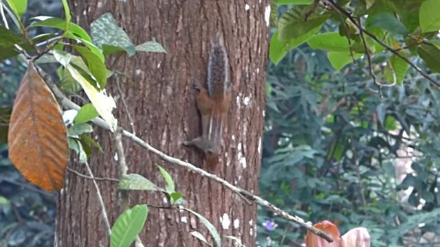 catnsquirrel2