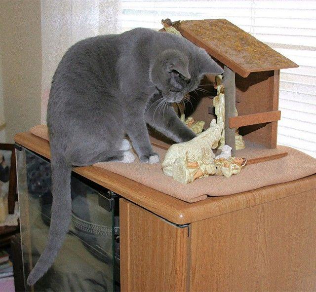 cats-crashing-nativity-scenes-117-5a27db9ca3688__605_e