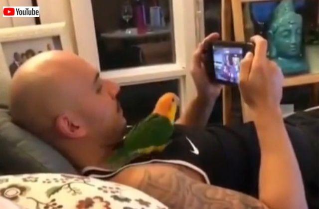 silliestbirds7_batch