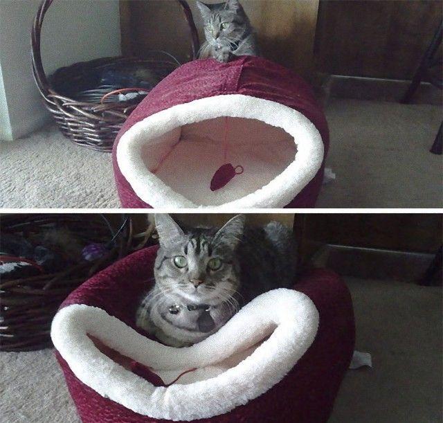 funny-idiot-cats-53-5ae9b5a013952__605_e