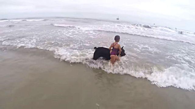 beachdogngirl1