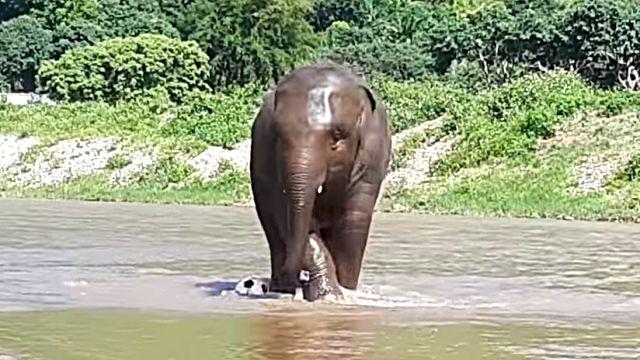 elephantplayingball4