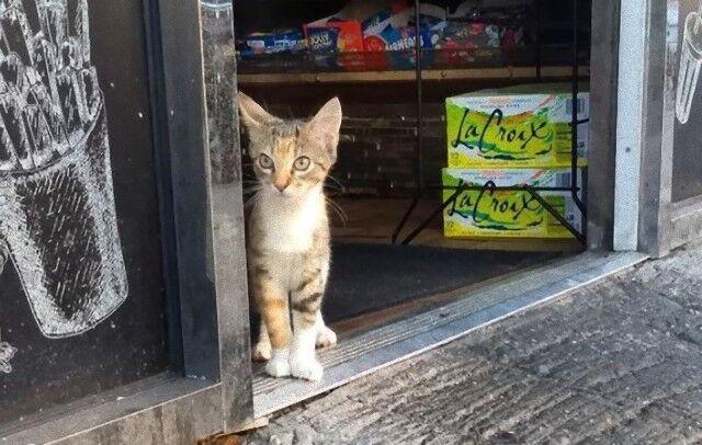 看板猫ズ「お客さん、いっぱい買ってってニャ!」ニューヨークの店先のボデガキャットたち
