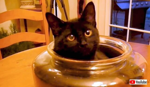 blackcats4_640