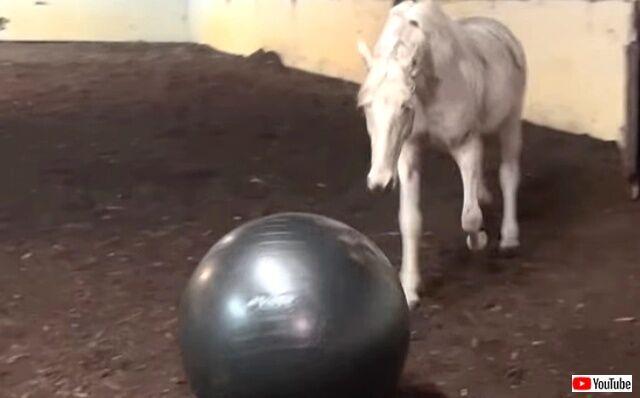 horsenball2_640
