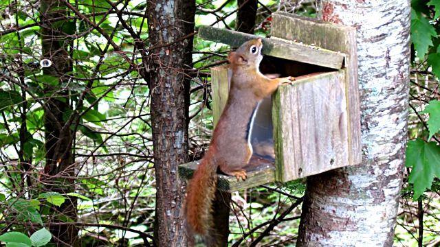 SquirrelSmashesThumb2