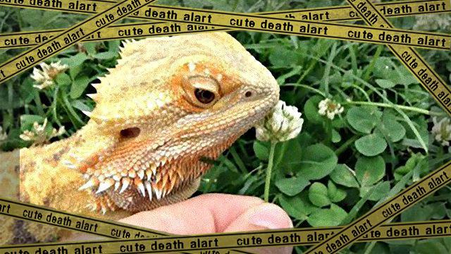 cute-reptiles-1131__605_ea-frame