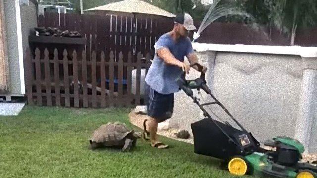 tortoisechases1_e