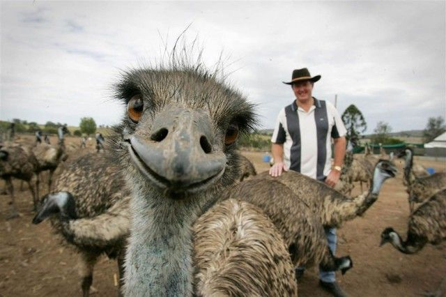 funny-animal-photobombs-22__880_e
