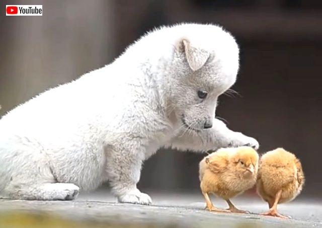 puppynchicks0_640