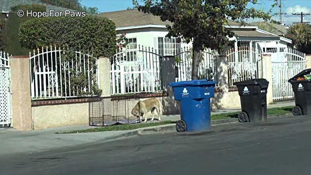 homelessdog3