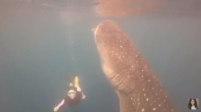 whalesharkdive4_e