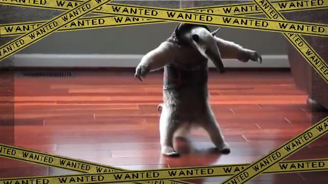 anteater-1 [www-frame